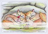 Die Postkarte zum Ausmalen; Postkarte Siebenschläfer. Zwei Siebenschläfer machen es sich in einer Höhle bequem und pennen. Der Siebenschläfer ist ein seltener, scheuer Bewohner des Felsengebirges.